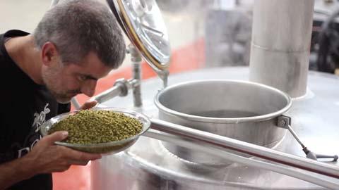 Hombre oliendo la cebada para hacer cerveza